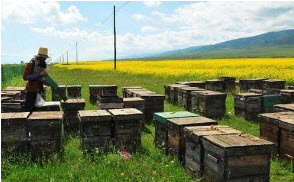 农村养蜂卖蜂蜜创业