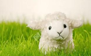 羊毛出在羊身上,这一点永远不会改变
